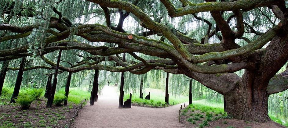 arboretum_byespritdefrance.jpg