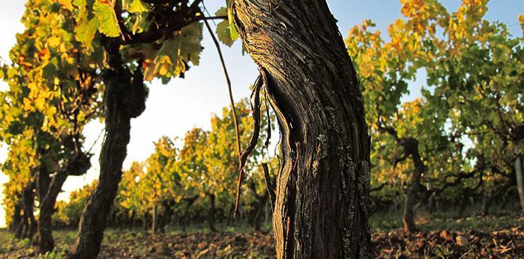 Route des vins de Bourgogne, proche du Chateau de Pierreclos